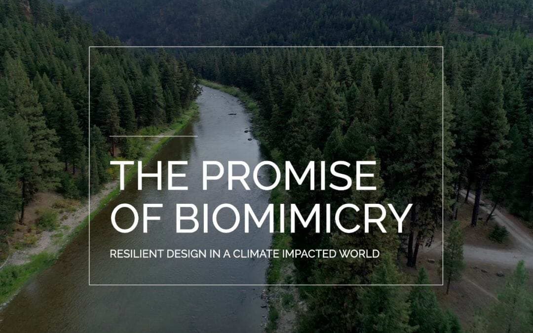 "Documentary, ""The Promise of Biomimicry"""